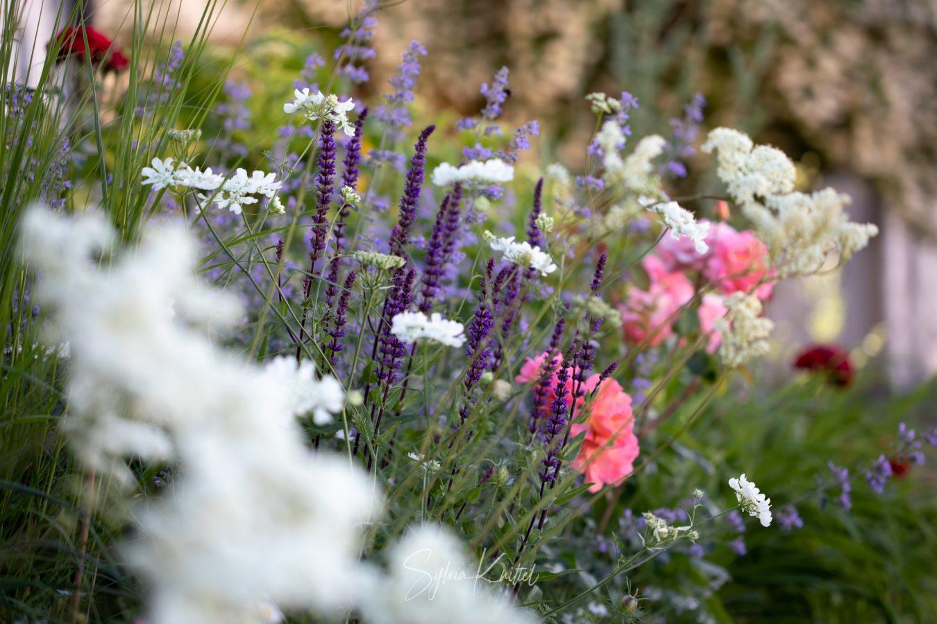 Wiesenhaft im Frühlingsgarten