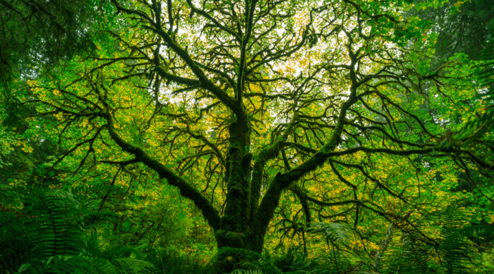 Redwood National Park, Foto: Sylvia Knittel
