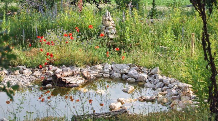 Naturgarten - Foto: David Seifert