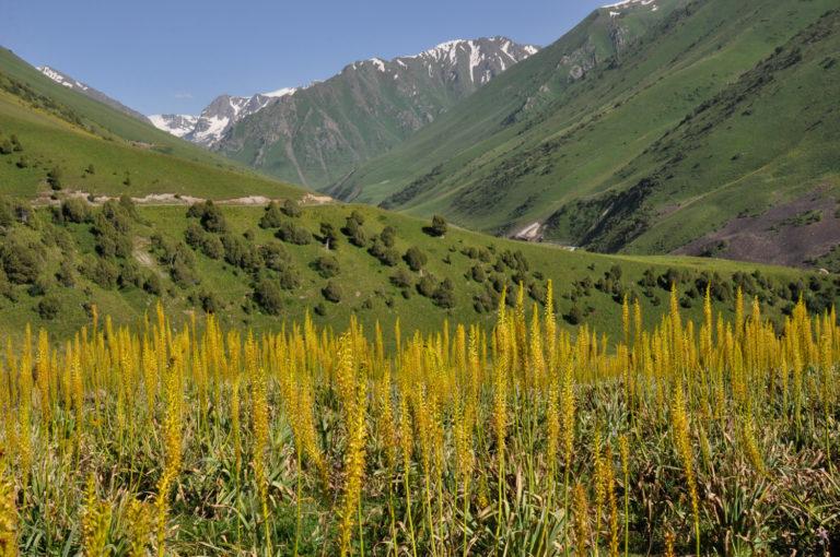 Foto: Cassian Schmidt, Kirgisistan