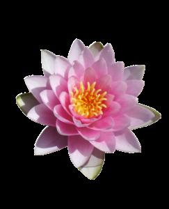Nymphaea - In unseren Garten-Vorträgen kannst Du dein Wissen erweitern, viele Anregungen und Ideen für deinen Garten sammeln unddich mit anderen leidenschaftlichen Natur- und GartenliebhaberInnen verbinden. Unsere Vorträge nehmen dich auch mit in fremde Länder und Gärten und bringen dich zum Träumen.